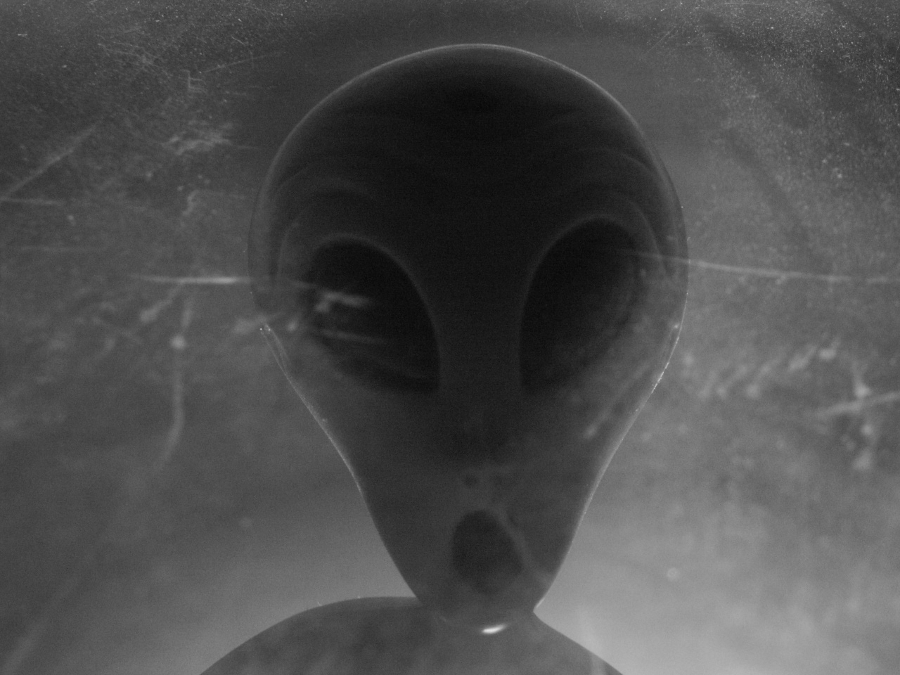 Displaying 19 gt images for scary alien pictures real